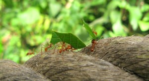 Some ants are carrying their food to their colony.
